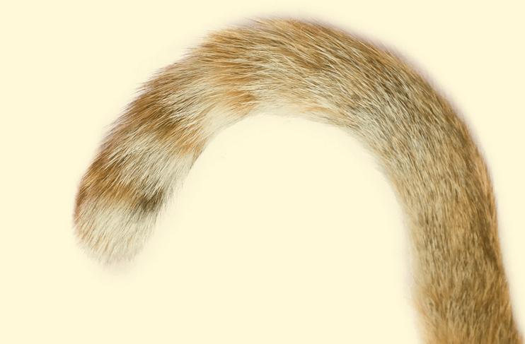 Long-tail-keywords