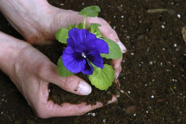 Grow Some Leads This Spring: 10 Tips to Create a Strong CTA