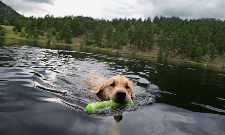 Dog swimming in a lake