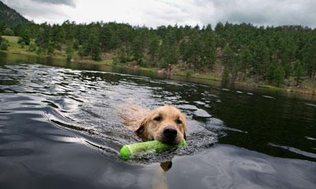 Dog swimming in a lake