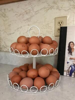 Britt Schwartz Chicken Eggs