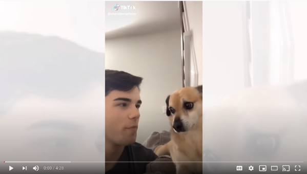 dogs react to tik toks