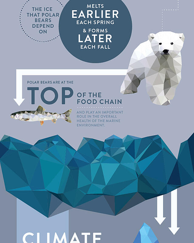 infographic-design-tips-polarbears-comp.jpg