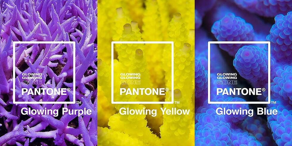 """Marketing Lessons from Pantone's """"Glowing, Glowing, Gone"""" Campaign"""