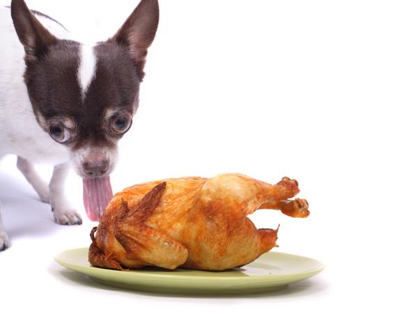 strange-thanksgiving-stock-photo15