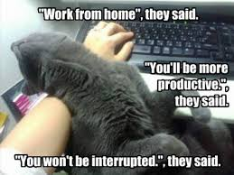 working-from-home-memes