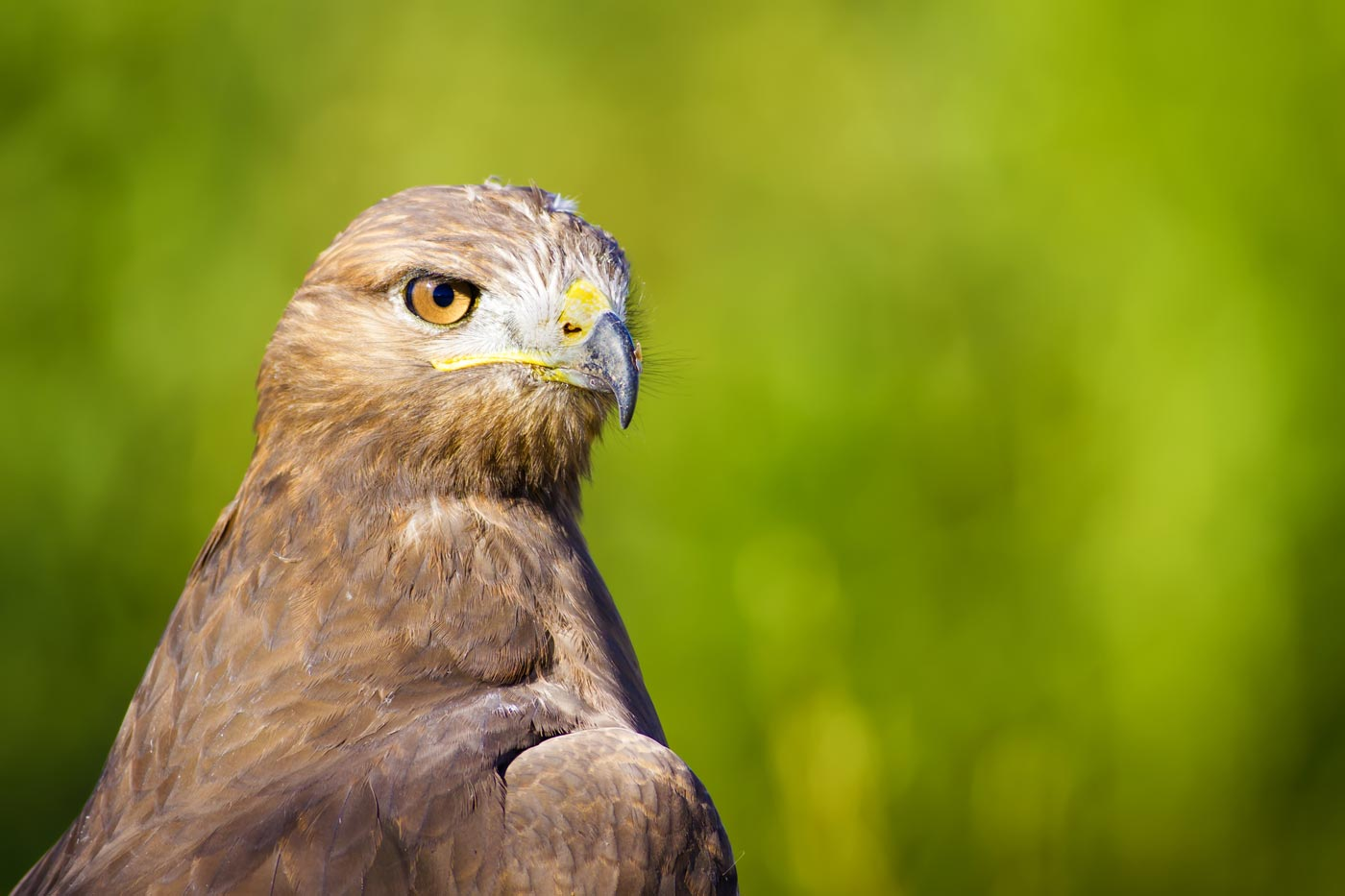 What Google's Hawk Update Means for You and Your Local SEO
