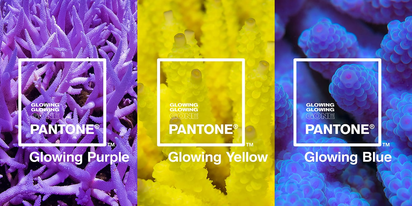 "Marketing Lessons from Pantone's ""Glowing, Glowing, Gone"" Campaign"